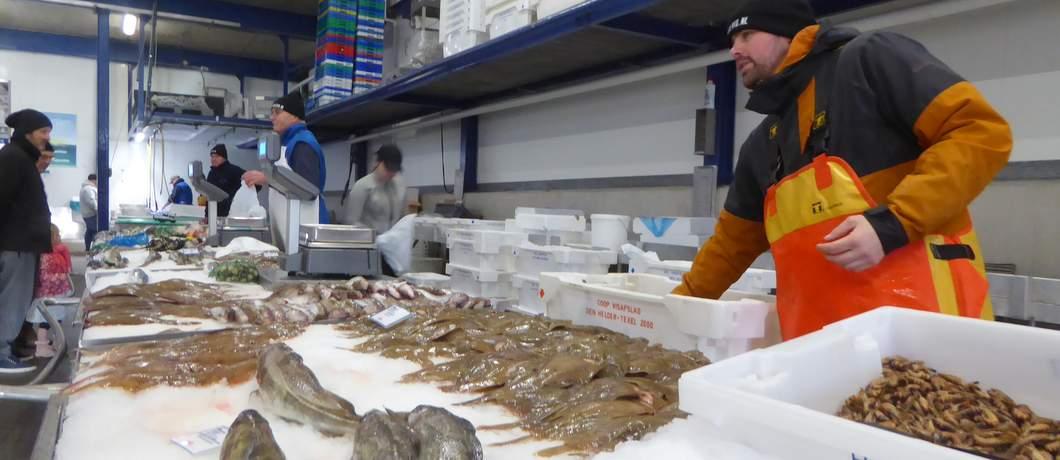 zaterdag-zeeverse-vismarkt-wieringen-davides