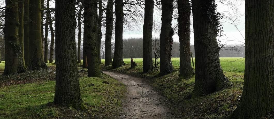 Wandelen door bossen bij landgoed Hackfort in de Achterhoek