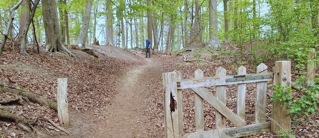 Beukenbos-wandelen-in-Montferland-davides