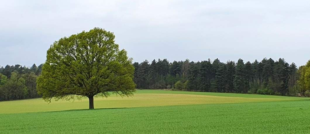 Hulzenberg-wandelen-in-Montferland-davides