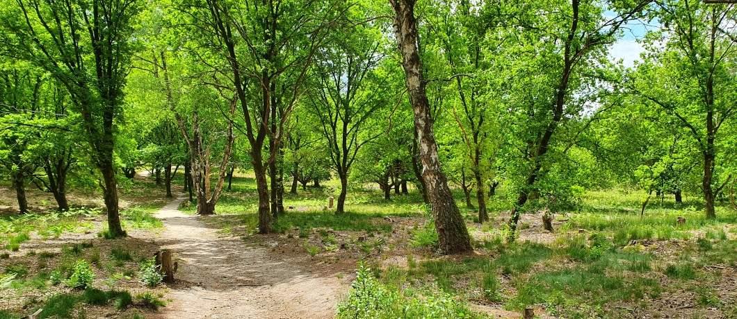 Kronkelend-bospad-wandelen-in-Montferland-davides