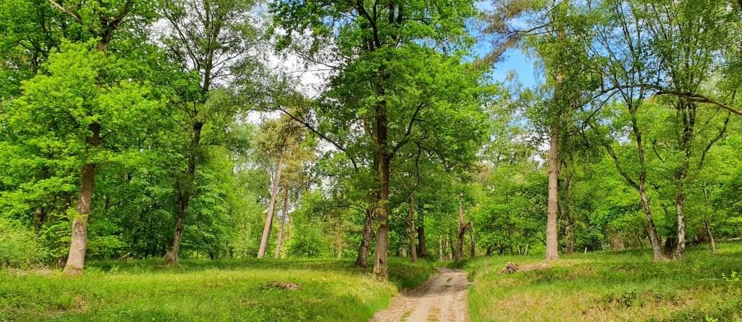 Open-bos-wandelen-in-Montferland-davides
