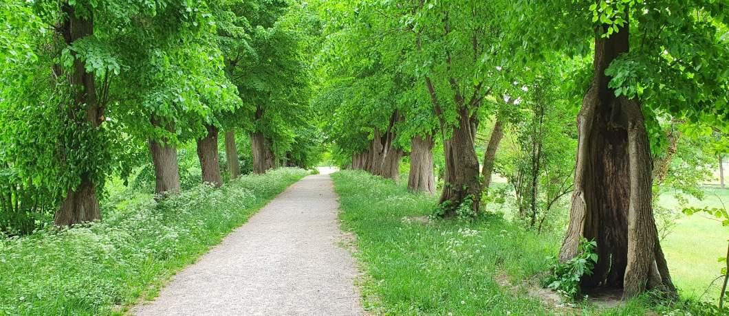 Stadswal-wandelen-in-Montferland-davides