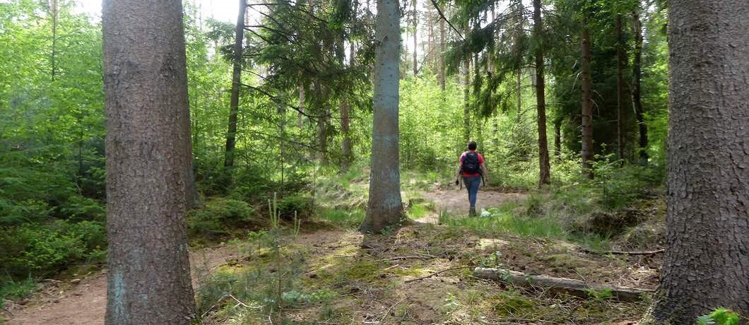 bospad-wandeling-echten-boswachterij-ruinen-davides