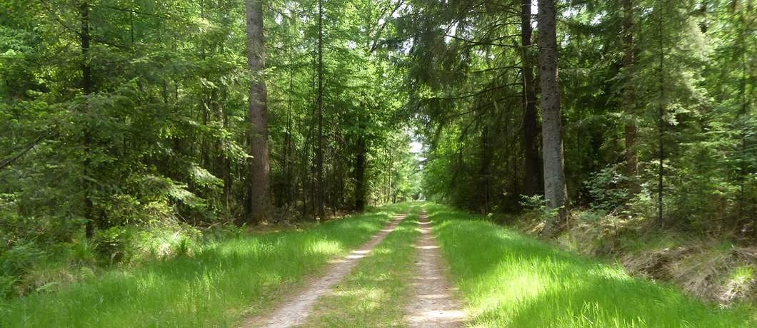 graspad-wandeling-echten-boswachterij-ruinen-davides