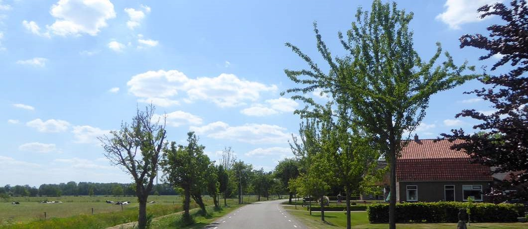 perenbomen-larijweg-fietsen-ruinerwold-davides