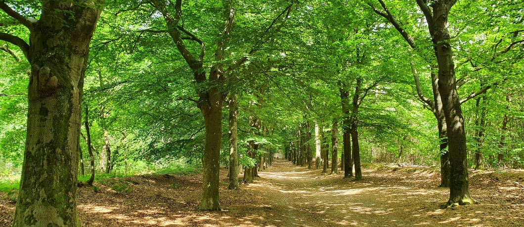 zuylensteinse-bos-wandelen-amerongen-utrechtse-heuvelrug-davides