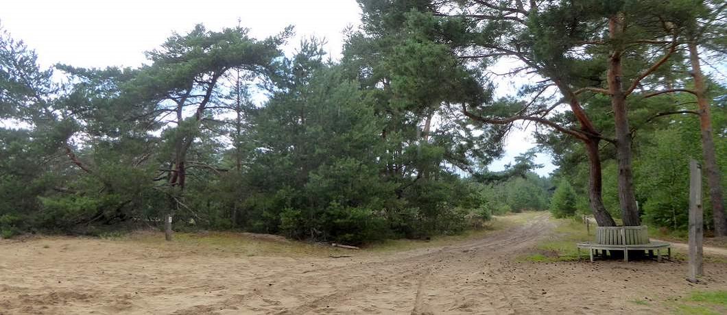 naaldbomen-leenderheide-fietsen-natuurgrenspark-de-groote-heide-davides