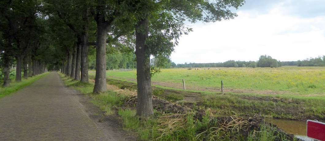 stilte-fietsen-natuurgrenspark-de-groote-heide-davides