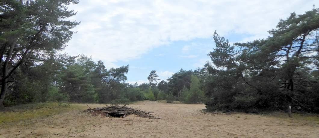 zandvlakte-leenderbos-fietsen-natuurgrenspark-de-groote-heide-davides