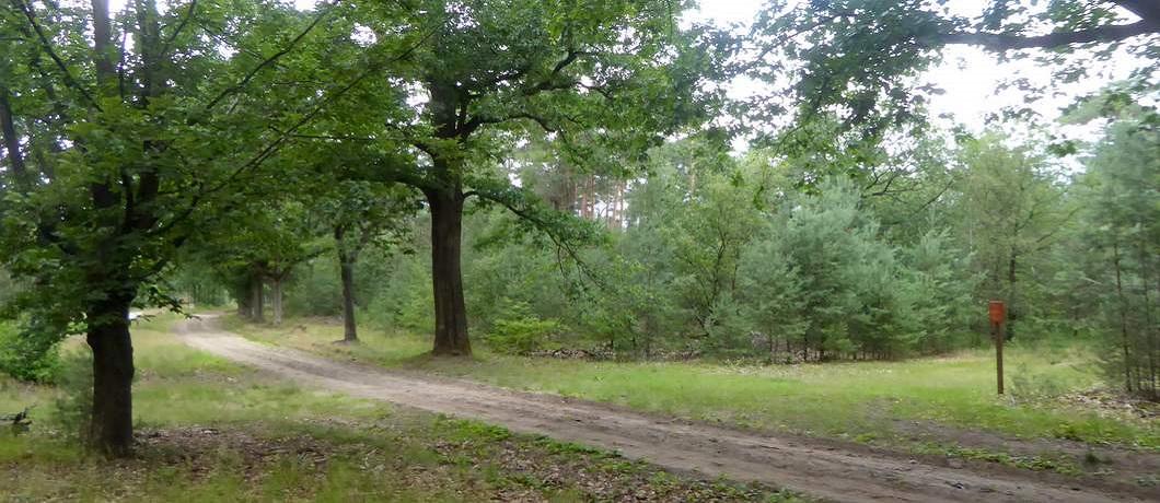 zanpad-bos-fietsen-natuurgrenspark-de-groote-heide-davides