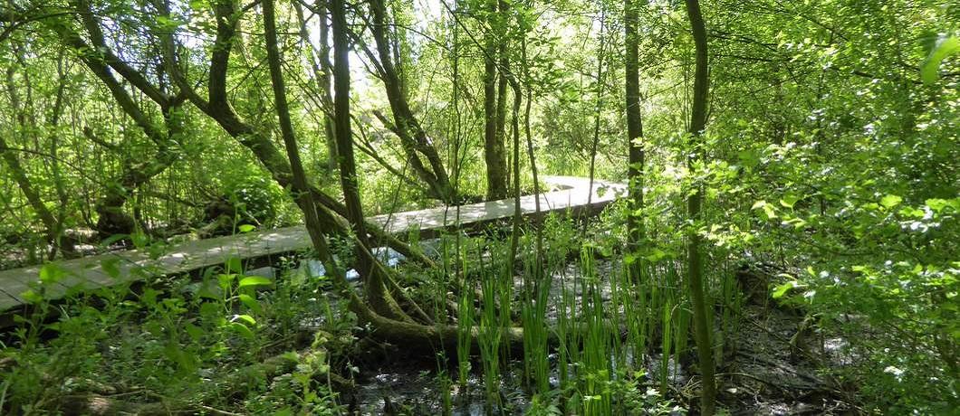 Vlonderpad in het Oeverbos bij de Trage Tocht Watergraafsmeer