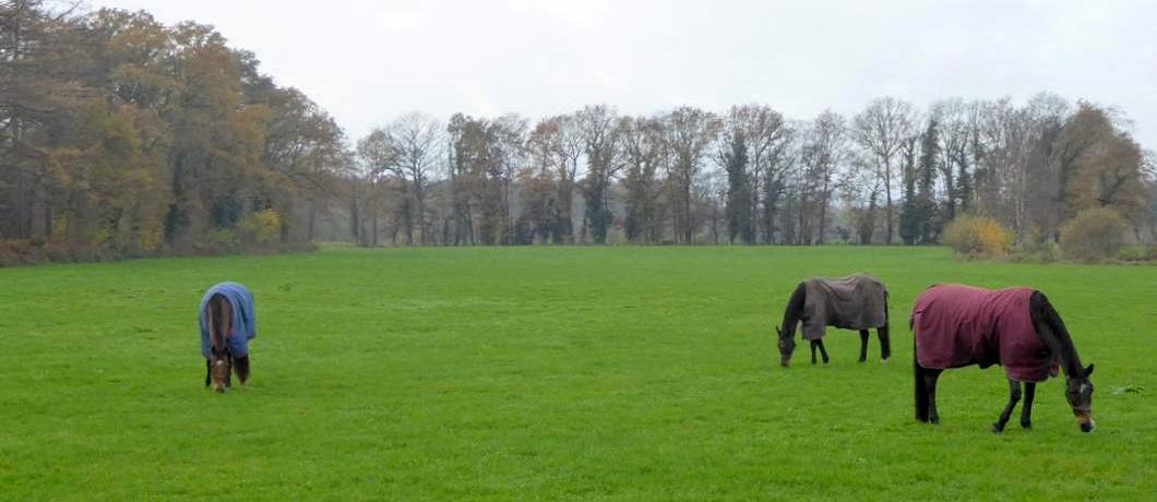 paarden-trage-tocht-winterswijk-ratum-davides