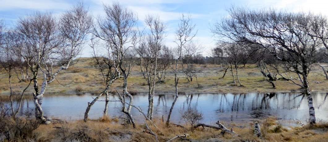 kanaal-wandelen-duinen-heemskerk-davides