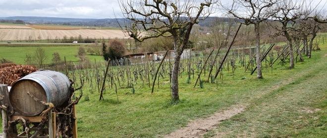 Bij Wahlwiller loop je deels over de Route des Vins. De Route des Vins is een bewegwijzerde wijnroute waarbij je maar liefst vijf wijngaarden met verbluffende uitzichten passeert.