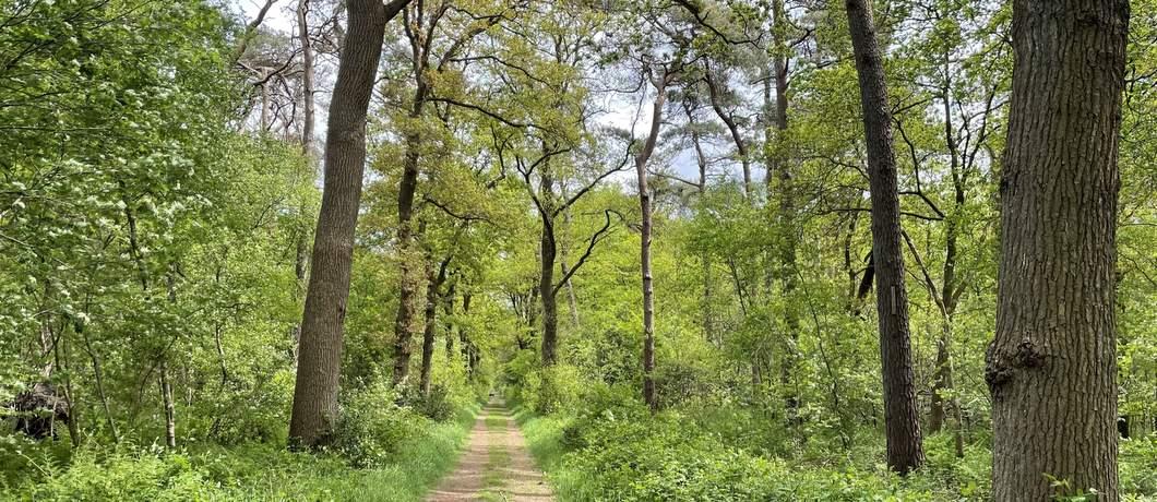recht-bospad-wandelen-rond-roden-davides
