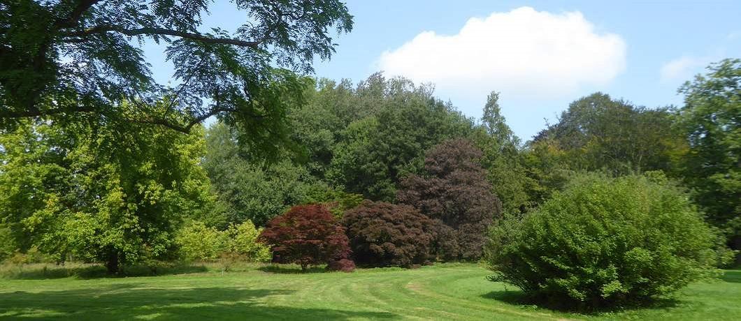 bomen-arboretum-poort-bulten-fietsen-stiltegebieden-twente-davides