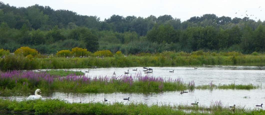 watervogels-wandeling-twekkelo-kristalbad-twente-davides